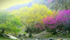 تور یک روزه شاد و مفرح دره ارغوان