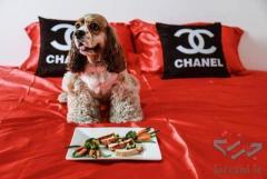 پاپی لند کلیه خدمات مربوط به سگ و حیوانات خانگی