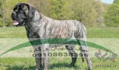 فروش سگ با نژاد سرابی